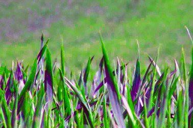 Riapre a Cassago la piattaforma ecologia, ma solo per conferire il verde