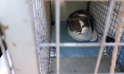 A Merate ci sono oltre trenta colonie feline: il racconto di chi se ne prende cura