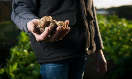 Si può coltivare l'orto anche fuori dal proprio comune. Ecco le regole da seguire