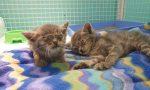 Due gattini in gravi condizioni salvati dai volontari
