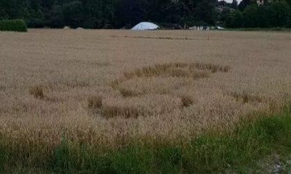 Spunta un pene nel campo di grano, imbarazzo in Brianza
