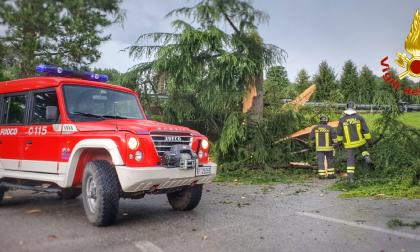 Albero di 20 metri esplode dopo essere stato colpito da un fulmine FOTO