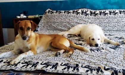 Coppia brianzola dona una nuova casa a due cani con un passato difficile