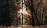 """Asd Equitando organizza """"Un fantastico bosco di storie"""""""
