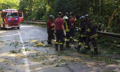 Albero caduto sulla Sp342: sul posto Protezione civile e Vigili del Fuoco
