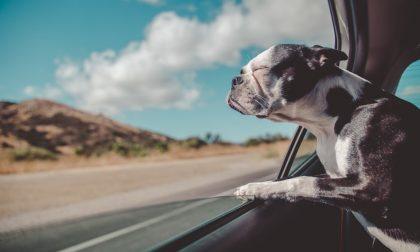 In vacanza senza cane? Ecco dove lasciarlo (e abituarlo a gestire il distacco) I CONSIGLI DELL'ESPERTA