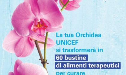 """Sirtori, il 26 e il 27 in piazza la raccolta fondi """"L'orchidea Unicef per i bambini"""""""