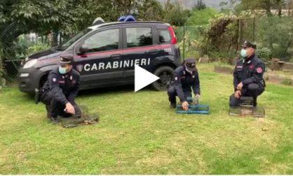 Bracconieri in azione nel Parco del Curone: denunciati dai Carabinieri VIDEO