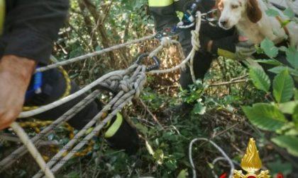 Cane da caccia precipita in un dirupo: i Vigili del Fuoco lo salvano