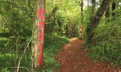Vandalismi all'Adda, alberi e bacheche imbrattati di vernice rossa LE FOTO
