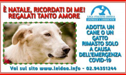 """""""E' Natale, ricordati di me"""": campagna di adozione di cani e gatti rimasti soli a causa della pandemia"""