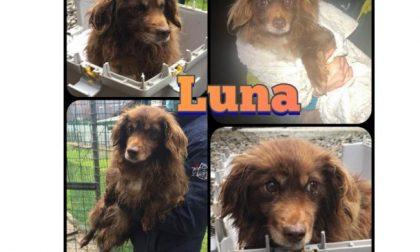 Ha vissuto 12 anni rinchiusa in un recinto: ora Luna cerca casa, amore, una famiglia