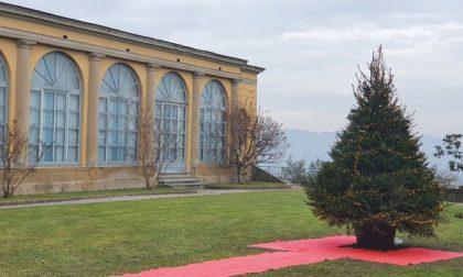 L'Abete Natalizio di Monticello potrà essere addobbato liberamente dai cittadini