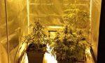 Serra di marijuana a casa della fidanzata: arrestato VIDEO