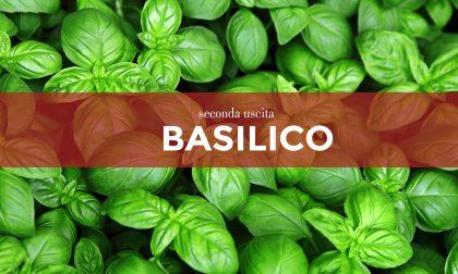 Tutti ortisti: da oggi in regalo con il Giornale di Merate i  semi di basilico