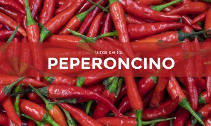 Tutti ortisti: in edicola con il Giornale di Merate i semi di peperoncino