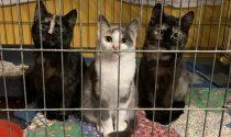 Enpa Merate cerca stalli per i suoi gattini