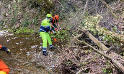 Protezione civile, i volontari rimuovono le piante cadute nel torrente Sonna FOTO