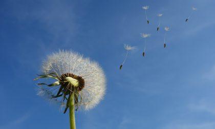 Inizio settimana con cieli azzurri e un po' di vento | Meteo Lombardia