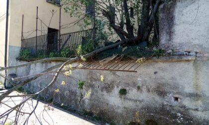 Intervento dei pompieri per un albero sradicato dal forte vento