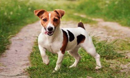 Cane avvelenato nel Parco del Curone
