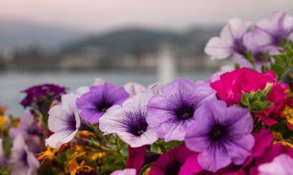 Telefono azzurro arriva a Brivio con la vendita dei fiori