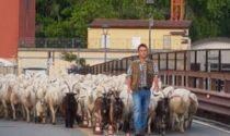 Transumanza a Lecco, il Ponte Azzone Visconti invaso da migliaia di pecore