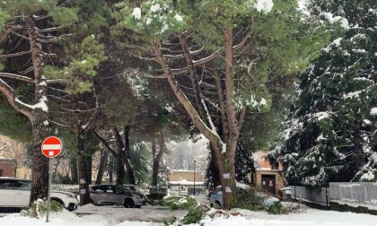 """Papaleo caustico sulle piante di viale Verdi: """"Strano paese è questo, ci si mobilita per il pino, ma non per il cittadino"""""""