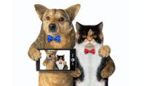 Da oggi in regalo con il Giornale di Merate l'album di disegni sugli animali