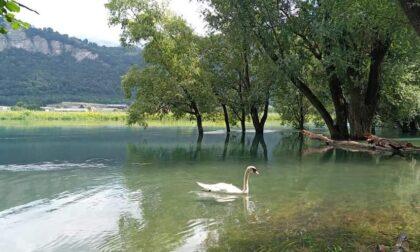 """Airuno, effetto temporali: il fiume Adda ricopre completamente la """"spiaggetta"""""""