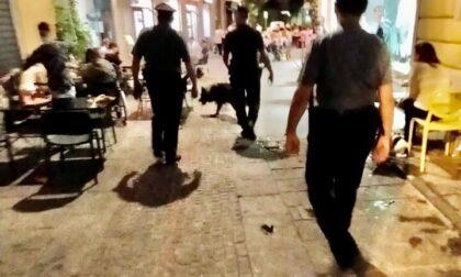 Carabinieri: i cinofili di Casatenovo intensificano i controlli nel Varesotto