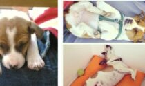 Dopo un litigio per ripicca uccise a colpi di forcone il cane della fidanzata, dopo 7 anni arriva la condanna